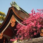 御香宮神社 4月