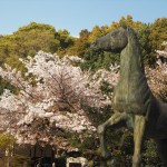 乃木神社 4月