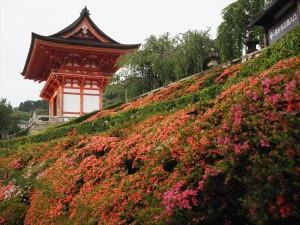 清水寺のサツキ