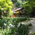 上賀茂神社 6月