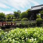 妙満寺 6月