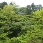 東福寺 6月
