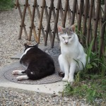 浄瑠璃寺の猫