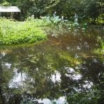 京都御苑 トンボ池の公開 8月