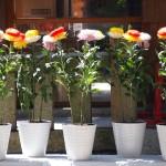 市比賣神社 菊