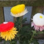 市比賣神社 菊のきせ綿