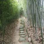 洛西竹林公園 9月