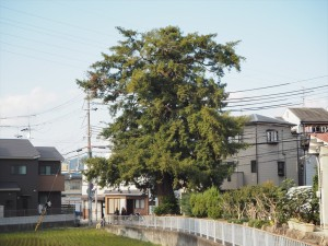 小野葛篭尻町の小町ガヤ
