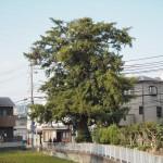 小町ガヤ 10月