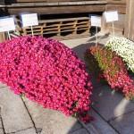 八坂神社 11月