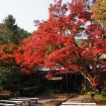 神蔵寺 11月