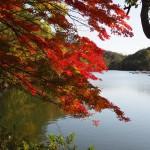 菖蒲谷池 11月