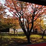 妙覚寺 11月17日
