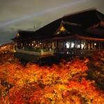 清水寺 ライトアップ 11月