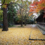 上御霊神社 11月