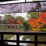 京都御苑 拾翠亭 11月23日