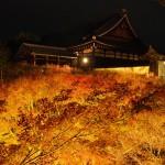 東福寺 ライトアップ