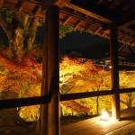 東福寺 ライトアップ 11月