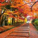 毘沙門堂の紅葉
