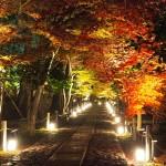 鹿王院 ライトアップ 12月