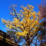 河合神社 12月