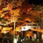 永観堂 ライトアップ 12月