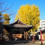 宇賀神社 12月
