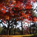 京都御苑 12月