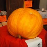 矢田寺 かぼちゃ供養 12月
